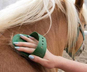 Cura del manto del cavallo