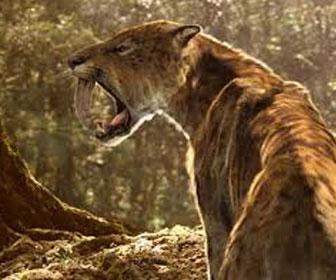 Tigre dai denti a sciabola