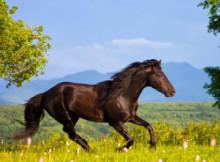 comportamento-del-cavallo-2.jpg
