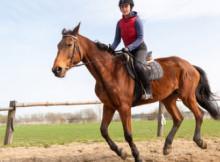 equitazione-come-iniziare-2.jpg