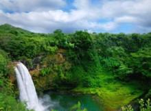 foresta-pluviale-2.jpg