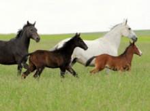 le-razze-del-cavallo-2.jpg