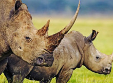 rinoceronte-1.jpg