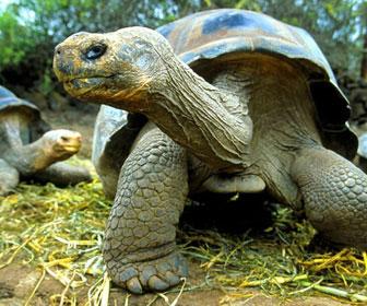Tartaruga mille animali for Termoriscaldatore per tartarughe