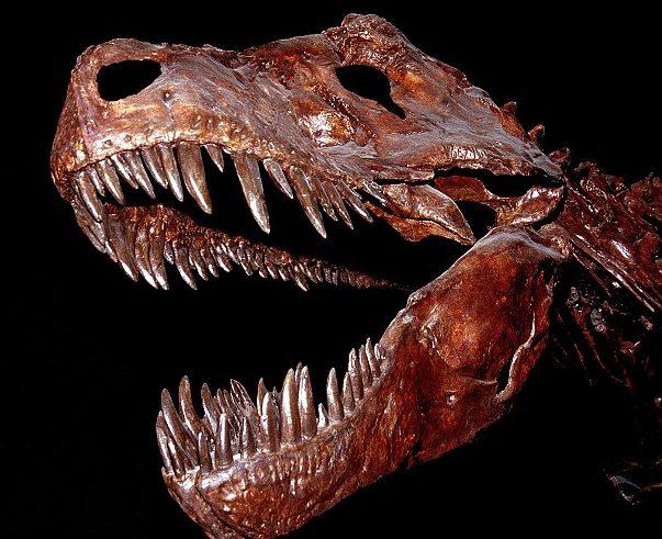 Morso del T-Rex