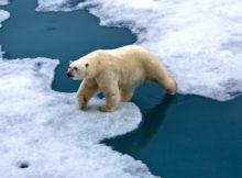 Cambiamenti climatici ed evoluzione