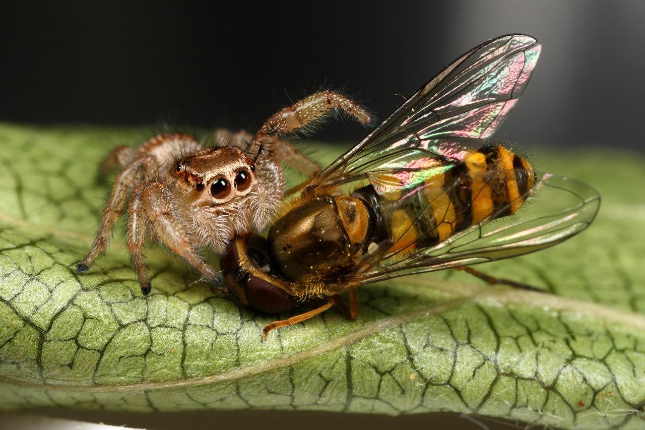 Predazione degli insetti