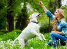 Cani e comunicazione