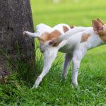 Cane che fa i bisogni su un albero