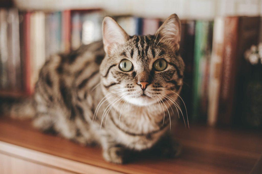 Le 10 Cose Che I Gatti Temono Di Più Mille Animali