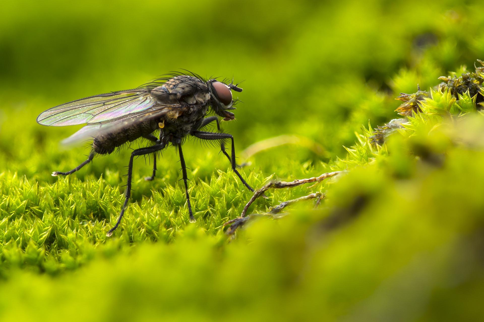 Le mosche dormono?