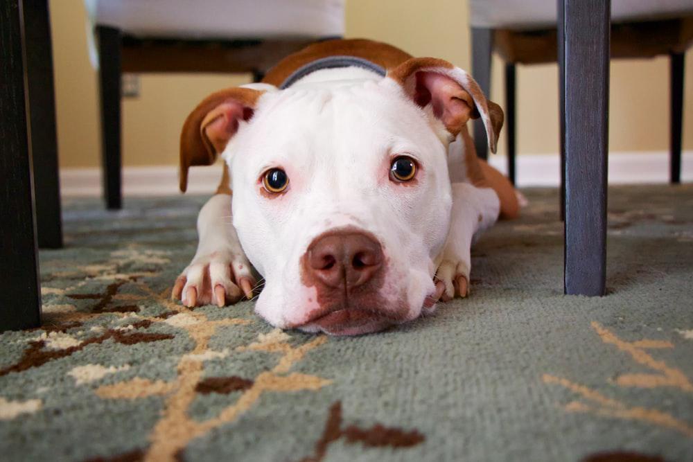 10 Curiosità sui cani