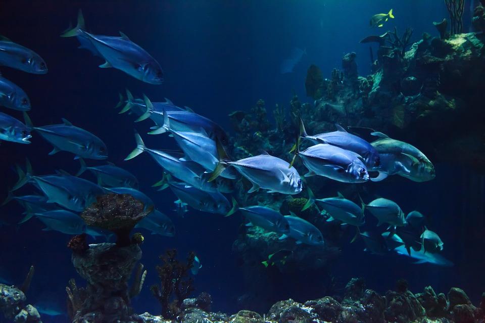 Pesci più veloci